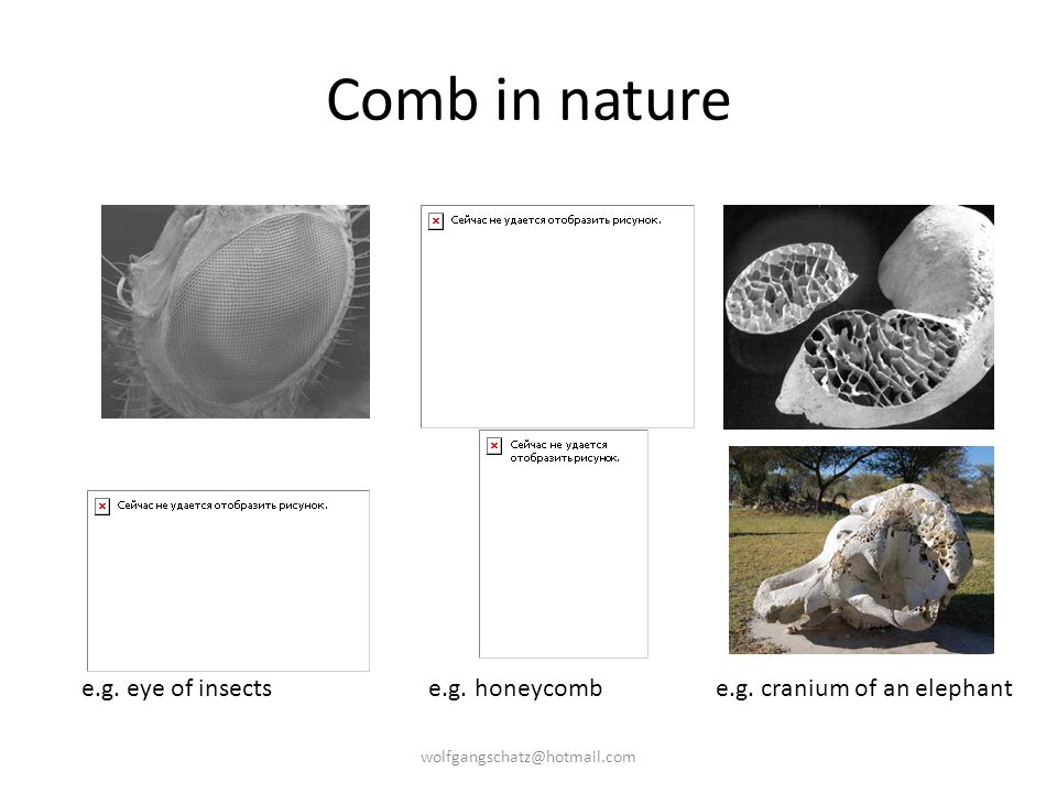 Comb in nature e.g. eye of insects e.g. honeycomb e.g.