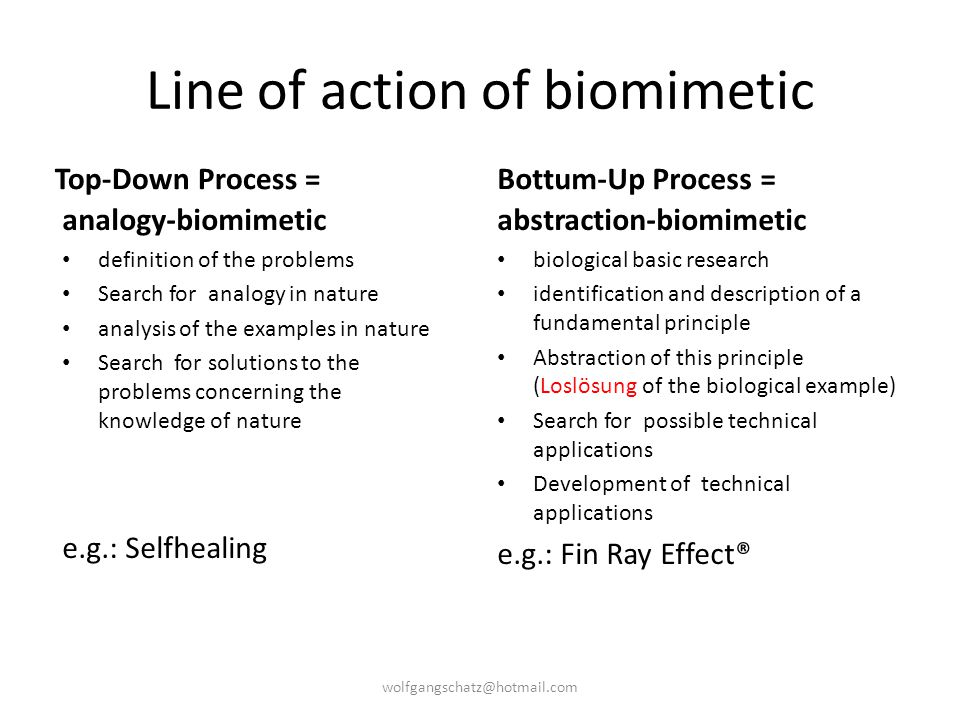 Line of action of biomimetic
