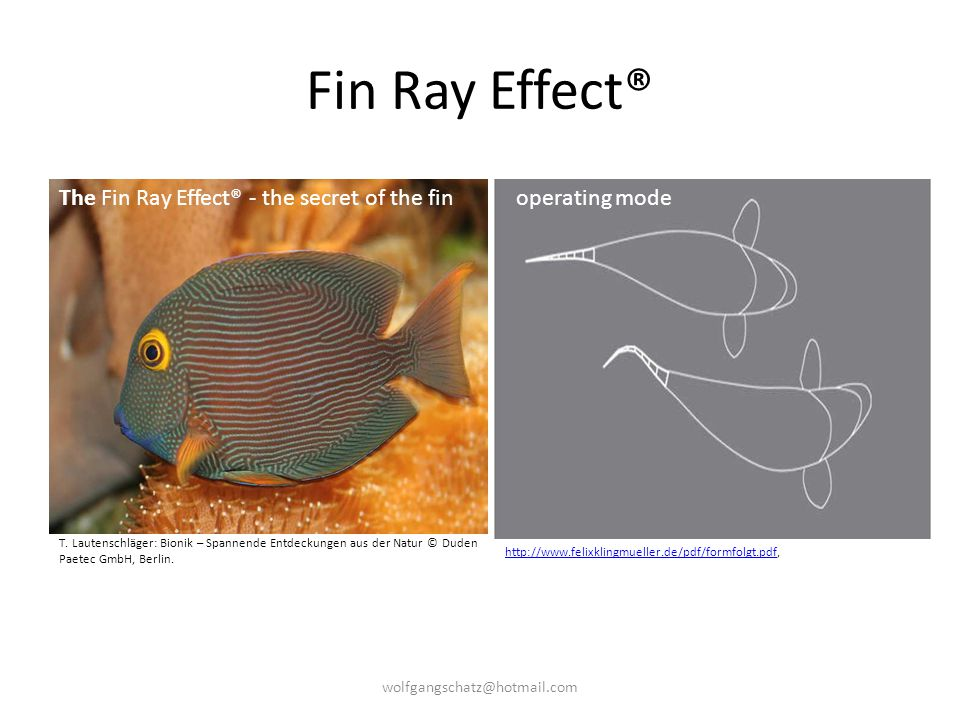 Fin Ray Effect® The Fin Ray Effect® - the secret of the fin