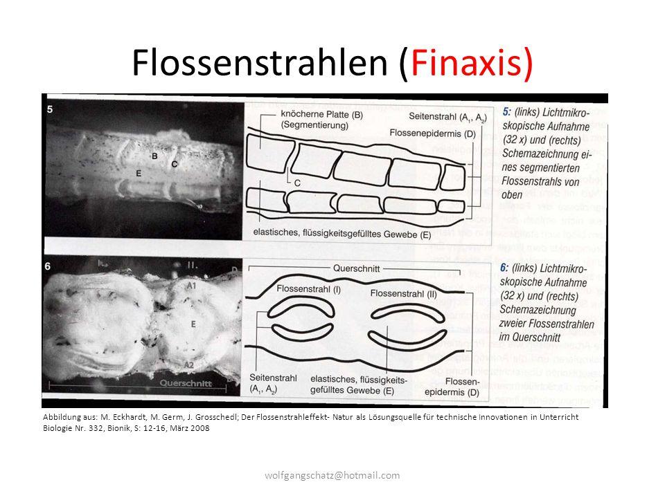 Flossenstrahlen (Finaxis)