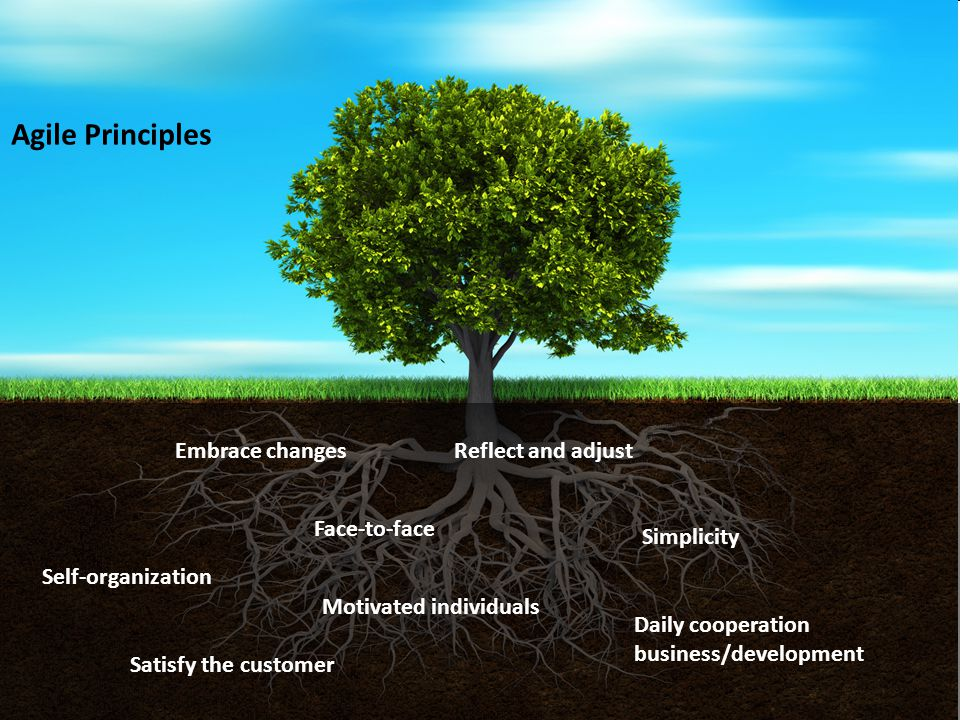 Agile Principles Embrace changes Reflect and adjust Face-to-face
