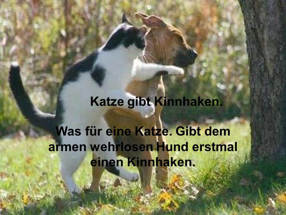 Katze gibt Kinnhaken. Was für eine Katze. Gibt dem armen wehrlosen Hund erstmal einen Kinnhaken.