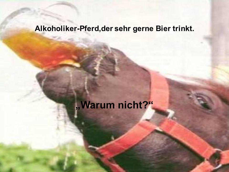 Alkoholiker-Pferd,der sehr gerne Bier trinkt.