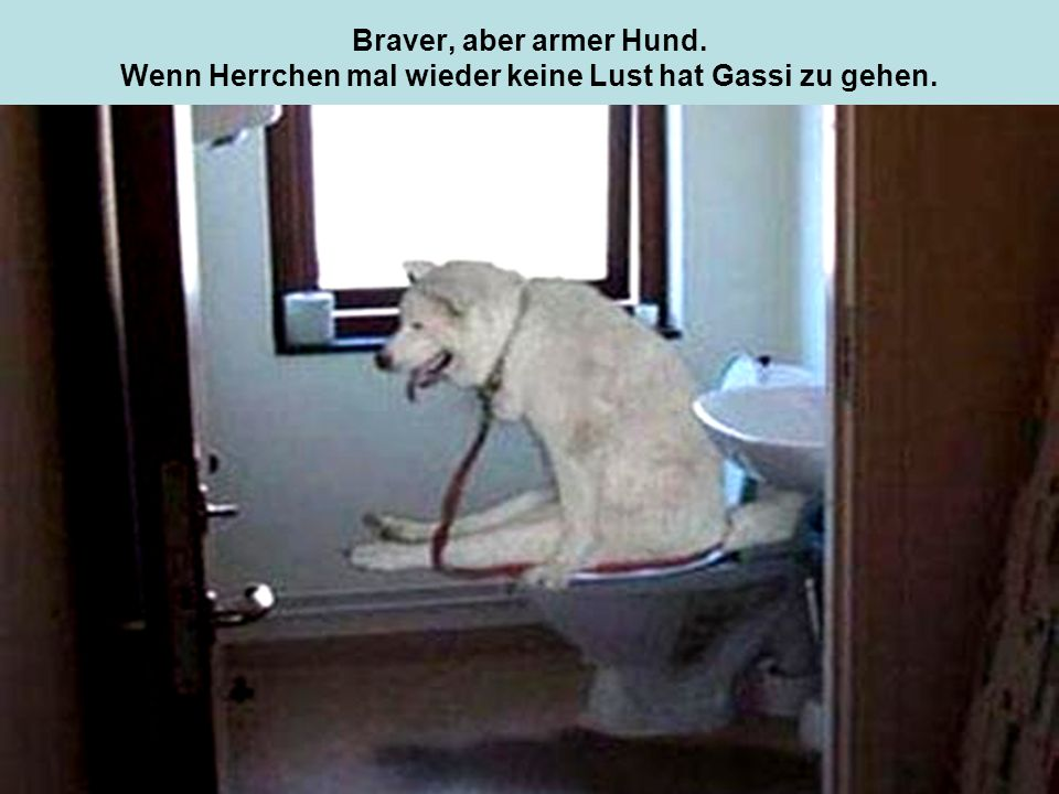 Braver, aber armer Hund. Wenn Herrchen mal wieder keine Lust hat Gassi zu gehen.