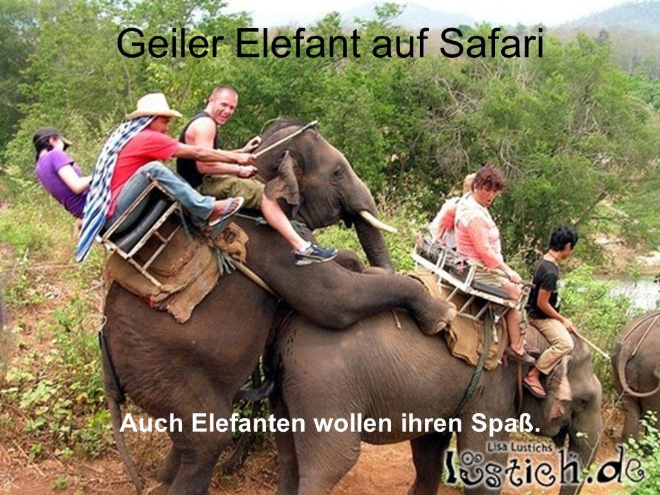 Geiler Elefant auf Safari