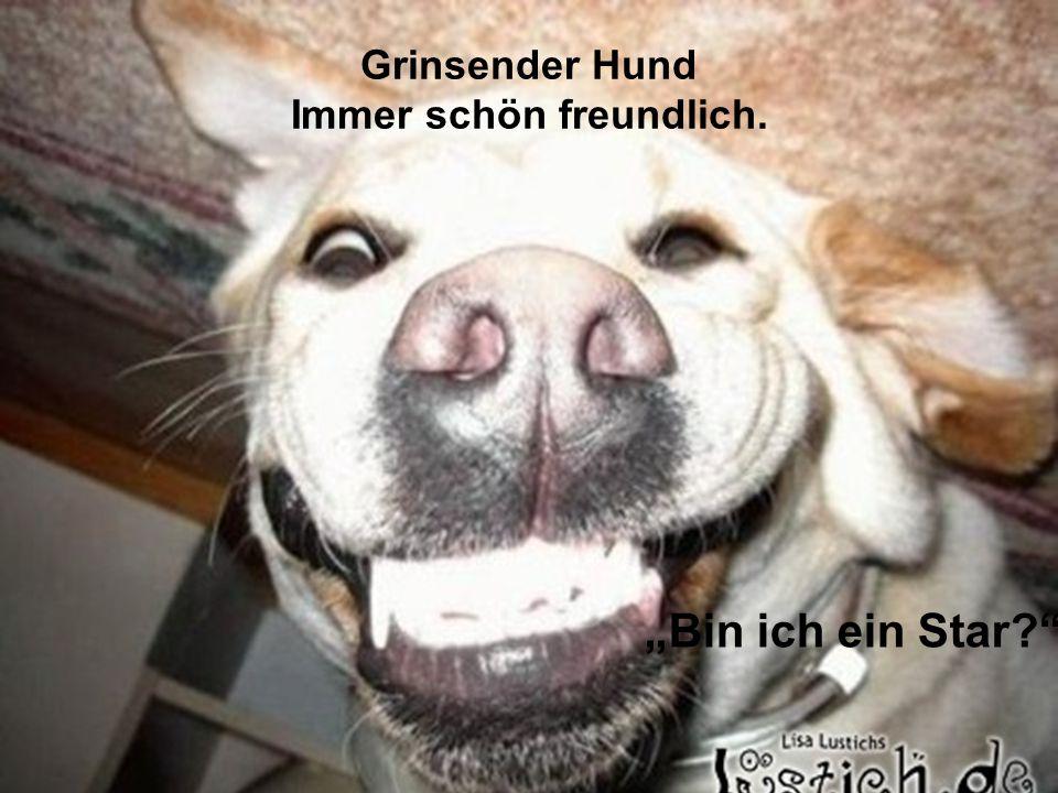 Grinsender Hund Immer schön freundlich.