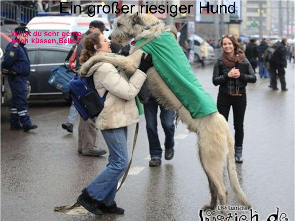 Ein großer,riesiger Hund