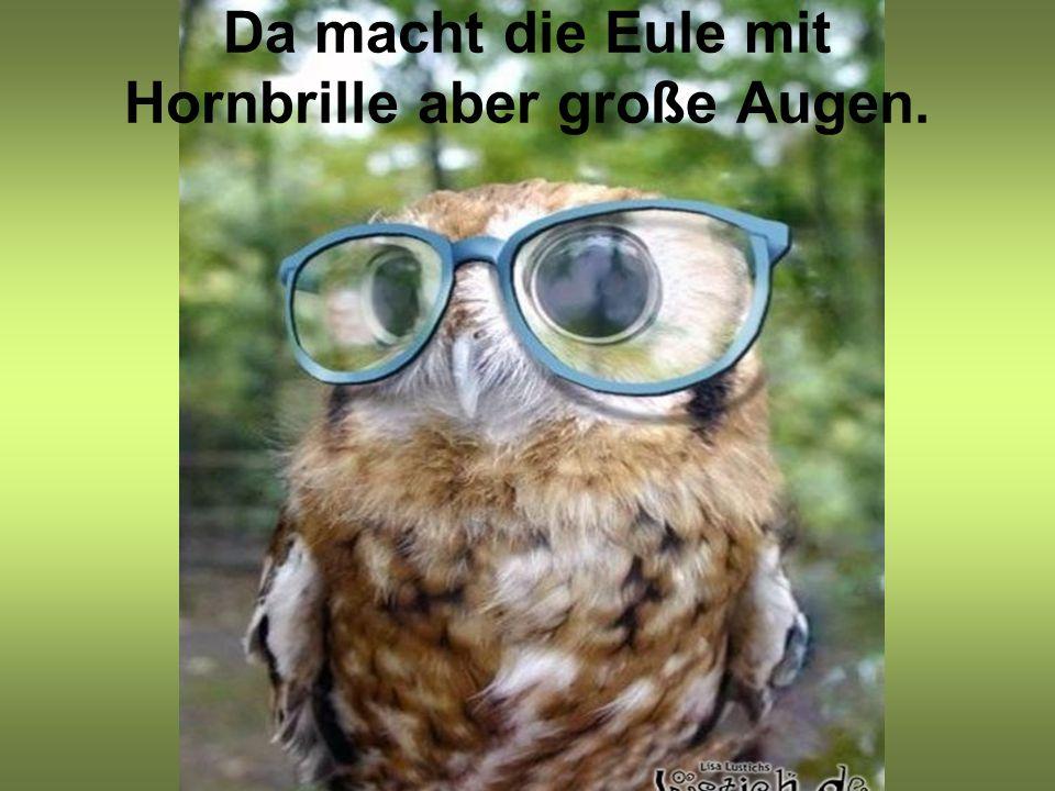 Da macht die Eule mit Hornbrille aber große Augen.