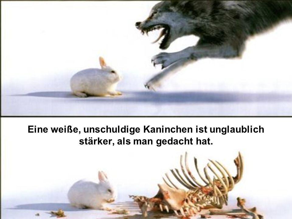 Eine weiße, unschuldige Kaninchen ist unglaublich stärker, als man gedacht hat.