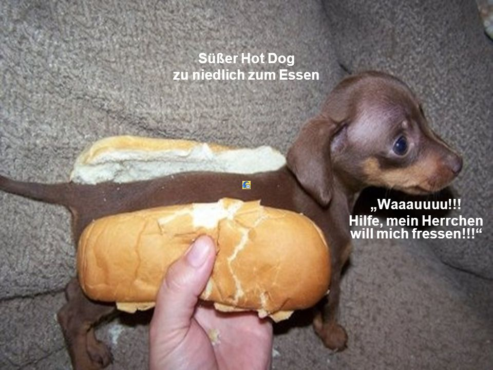 Süßer Hot Dog zu niedlich zum Essen