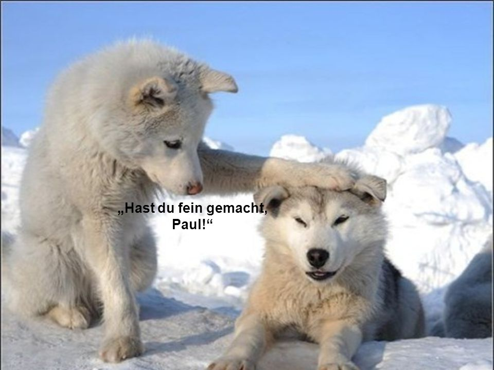 """Hast du fein gemacht, Paul!"