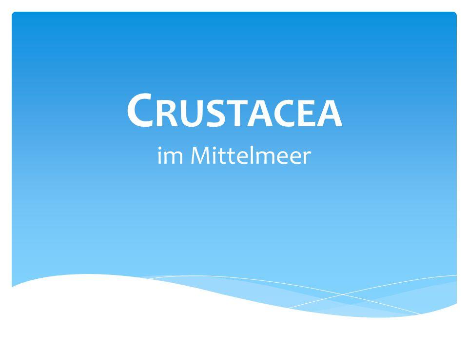 Crustacea im Mittelmeer