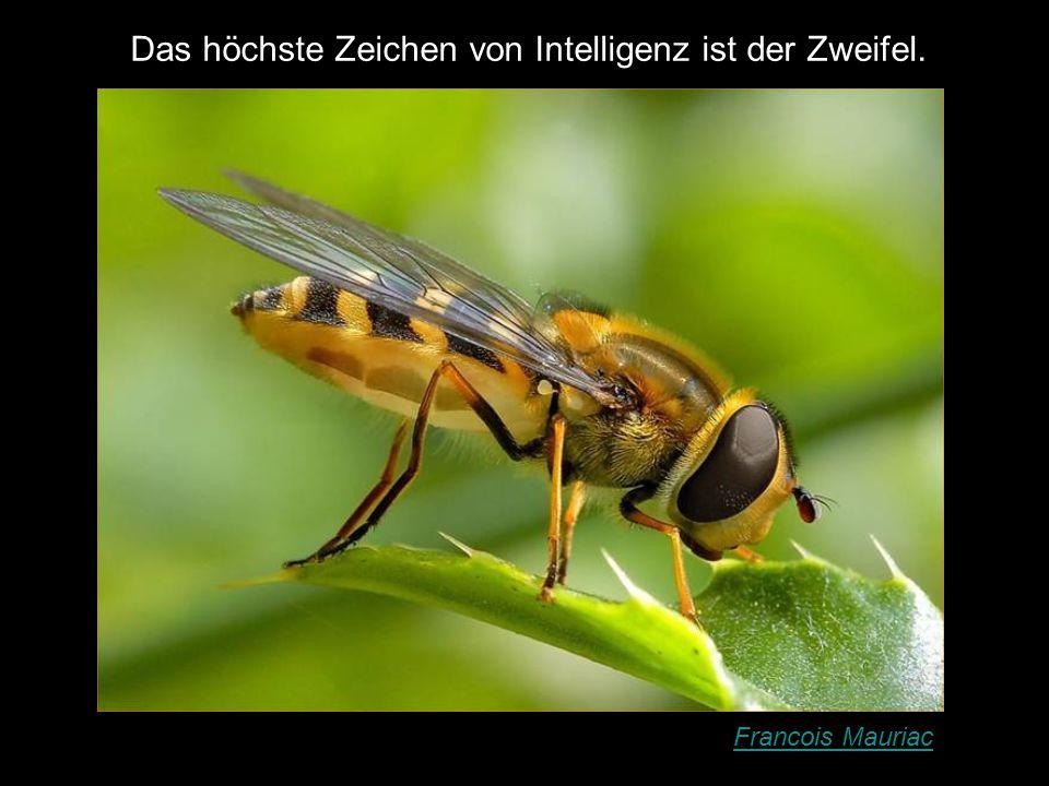 Das höchste Zeichen von Intelligenz ist der Zweifel.
