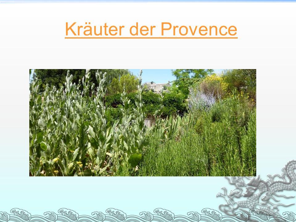 Kräuter der Provence