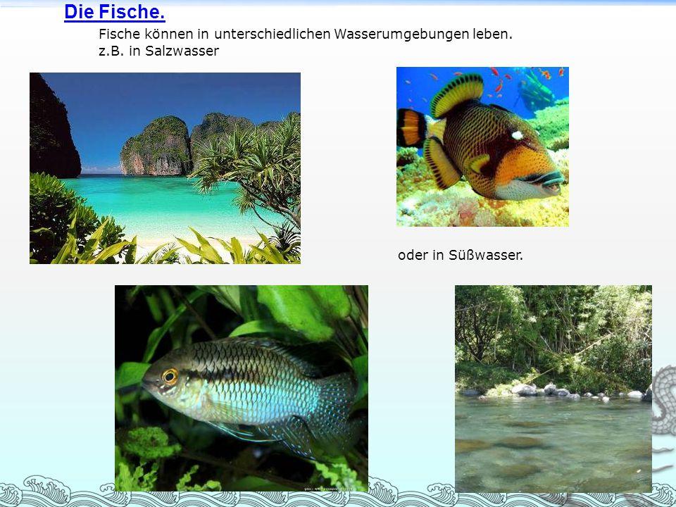 Die Fische. Fische können in unterschiedlichen Wasserumgebungen leben.