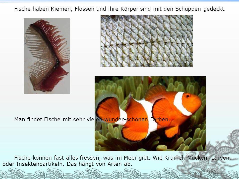 Fische haben Kiemen, Flossen und ihre Körper sind mit den Schuppen gedeckt.
