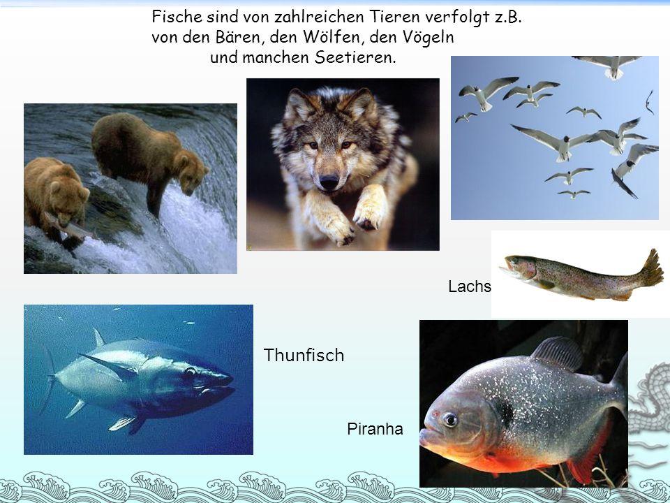 von den Bären, den Wölfen, den Vögeln und manchen Seetieren.