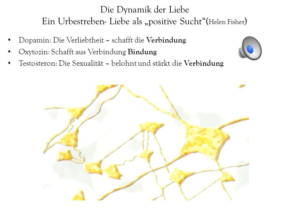 """Die Dynamik der Liebe Ein Urbestreben- Liebe als """"positive Sucht (Helen Fisher)"""