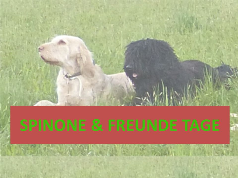 SPINONE & FREUNDE TAGE