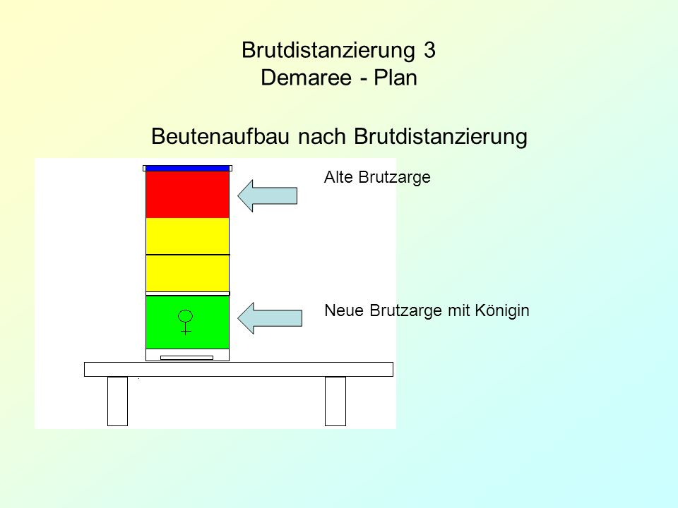 Brutdistanzierung 3 Demaree - Plan