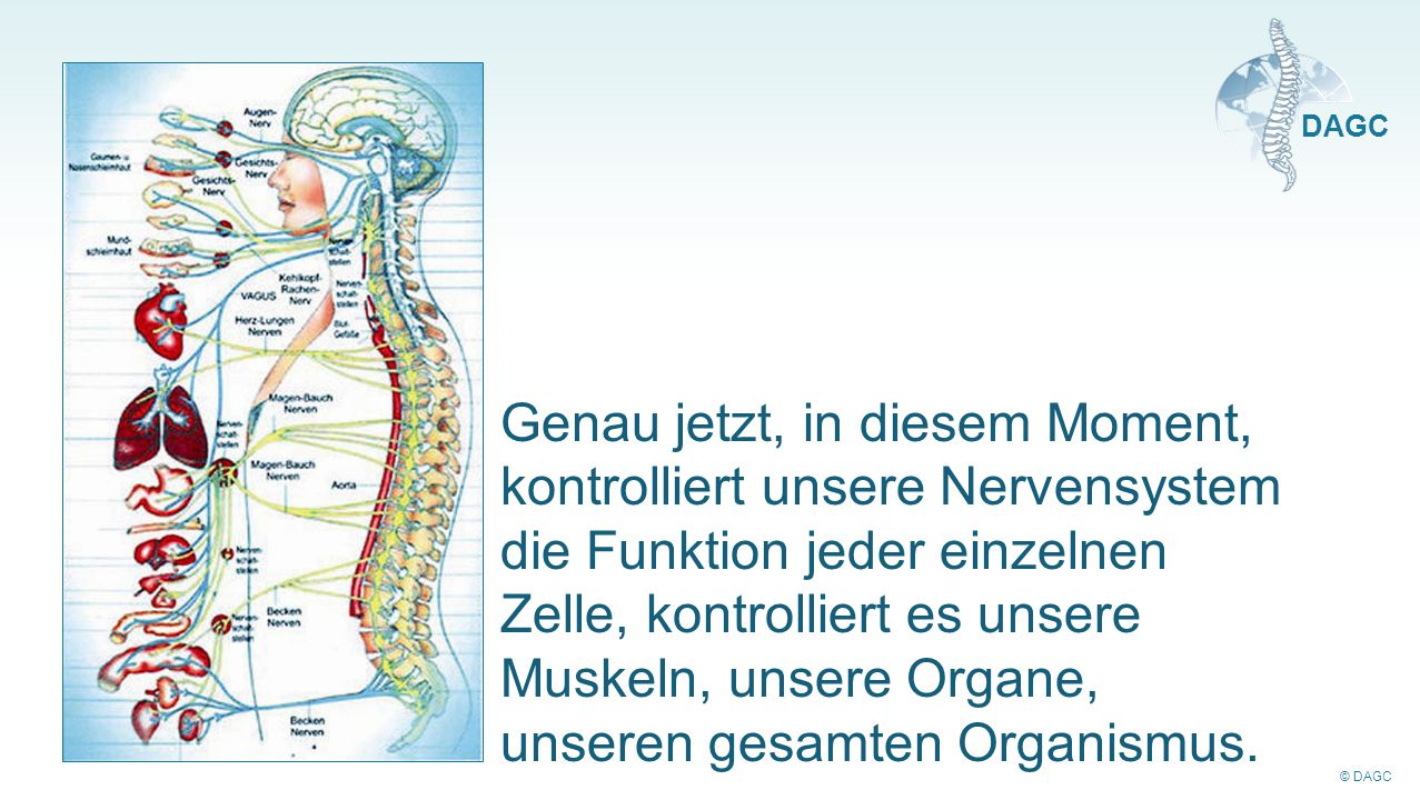Genau jetzt, in diesem Moment, kontrolliert unsere Nervensystem die Funktion jeder einzelnen Zelle, kontrolliert es unsere Muskeln, unsere Organe, unseren gesamten Organismus.