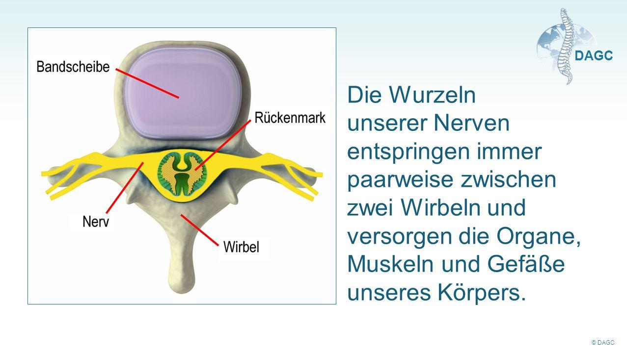 Die Wurzeln unserer Nerven entspringen immer paarweise zwischen zwei Wirbeln und versorgen die Organe, Muskeln und Gefäße unseres Körpers.