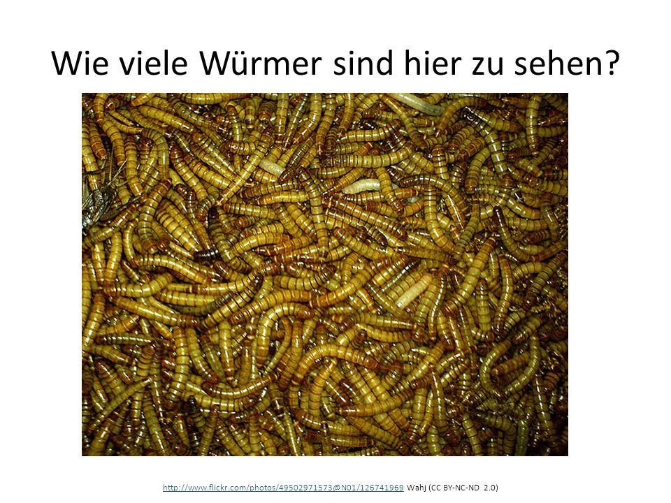 Wie viele Würmer sind hier zu sehen