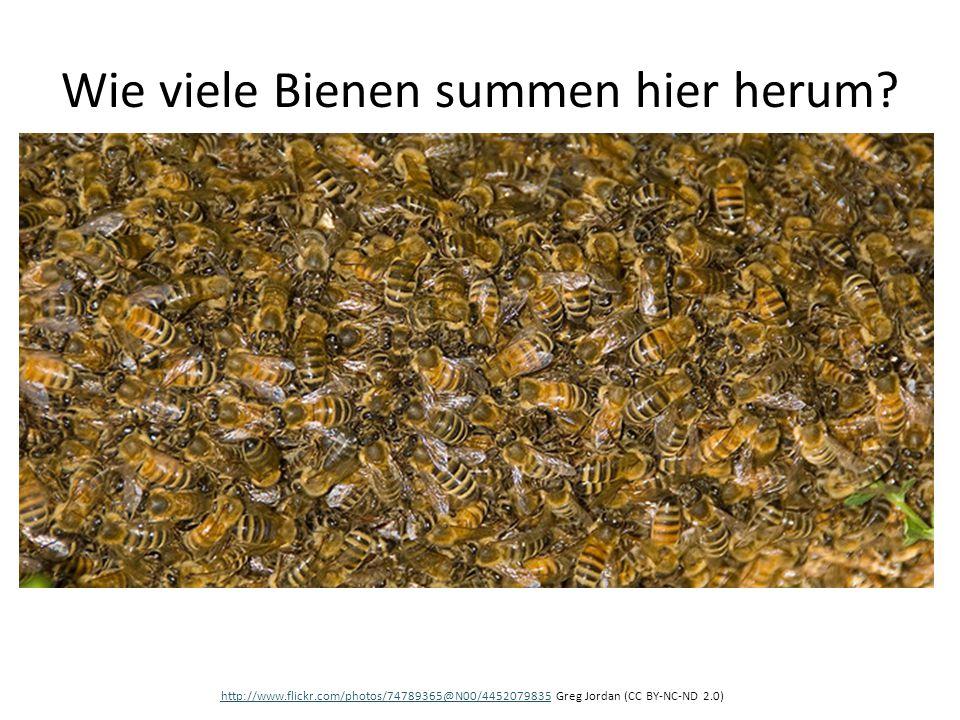 Wie viele Bienen summen hier herum