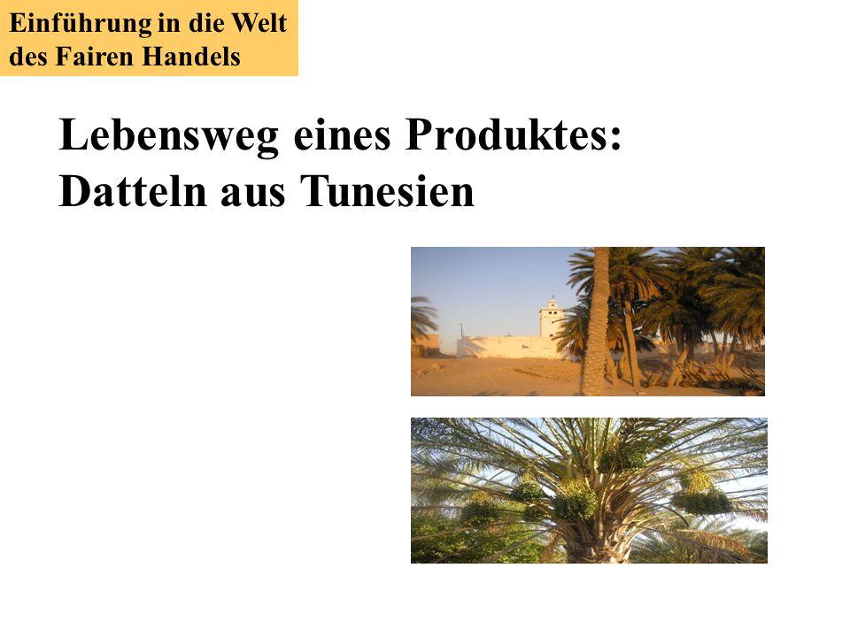 Lebensweg eines Produktes: Datteln aus Tunesien
