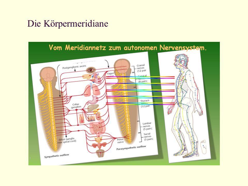 Die Körpermeridiane