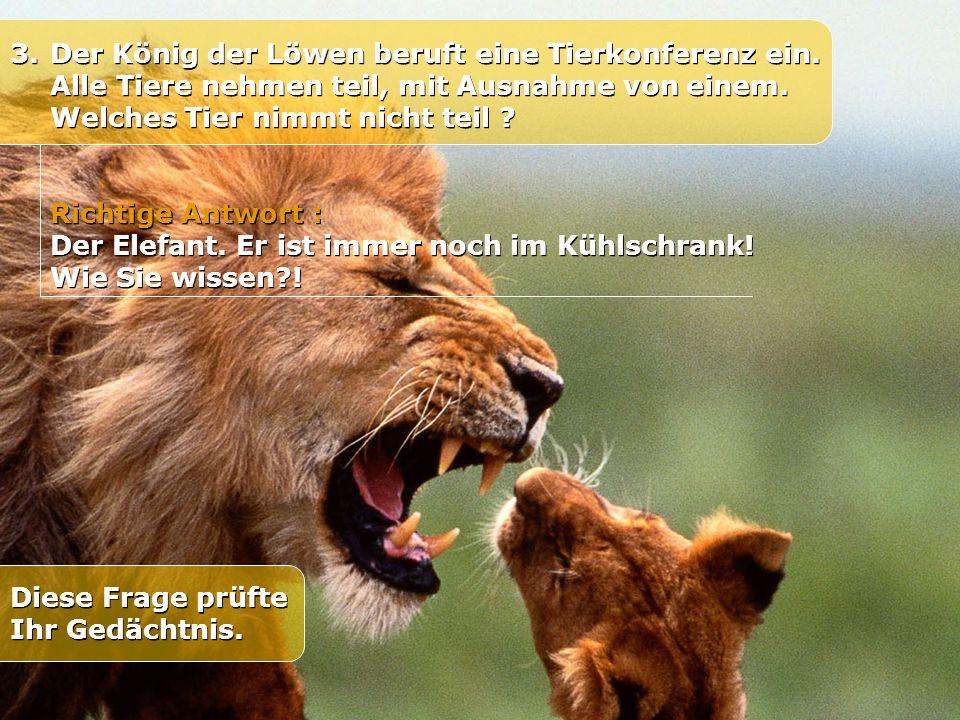 3. Der König der Löwen beruft eine Tierkonferenz ein