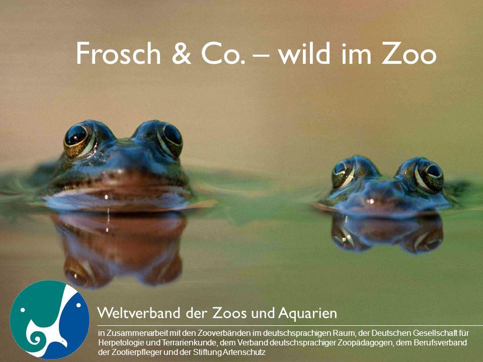 Frosch & Co. – wild im Zoo Weltverband der Zoos und Aquarien