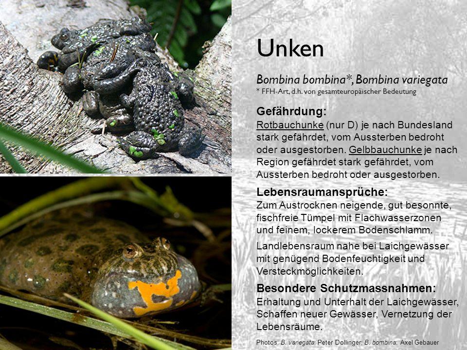 UnkenBombina bombina*, Bombina variegata * FFH-Art, d.h. von gesamteuropäischer Bedeutung. Gefährdung: