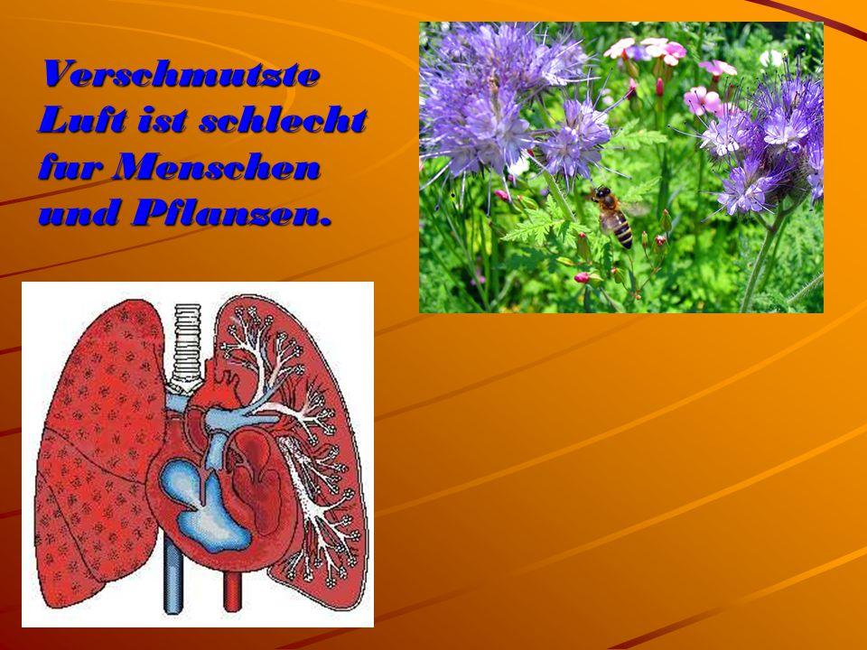 Verschmutzte Luft ist schlecht fur Menschen und Pflanzen.