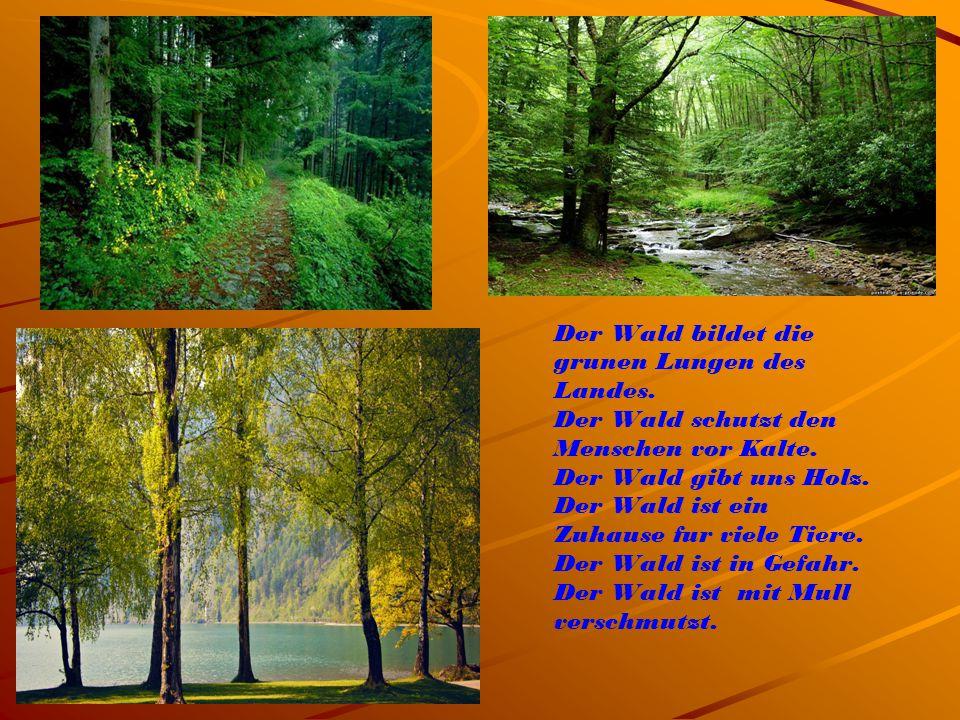 Der Wald bildet die grunen Lungen des Landes