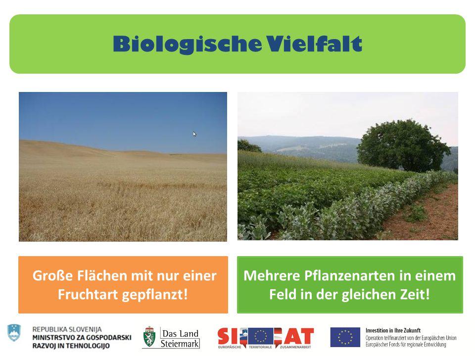 Biologische Vielfalt Große Flächen mit nur einer Fruchtart gepflanzt!