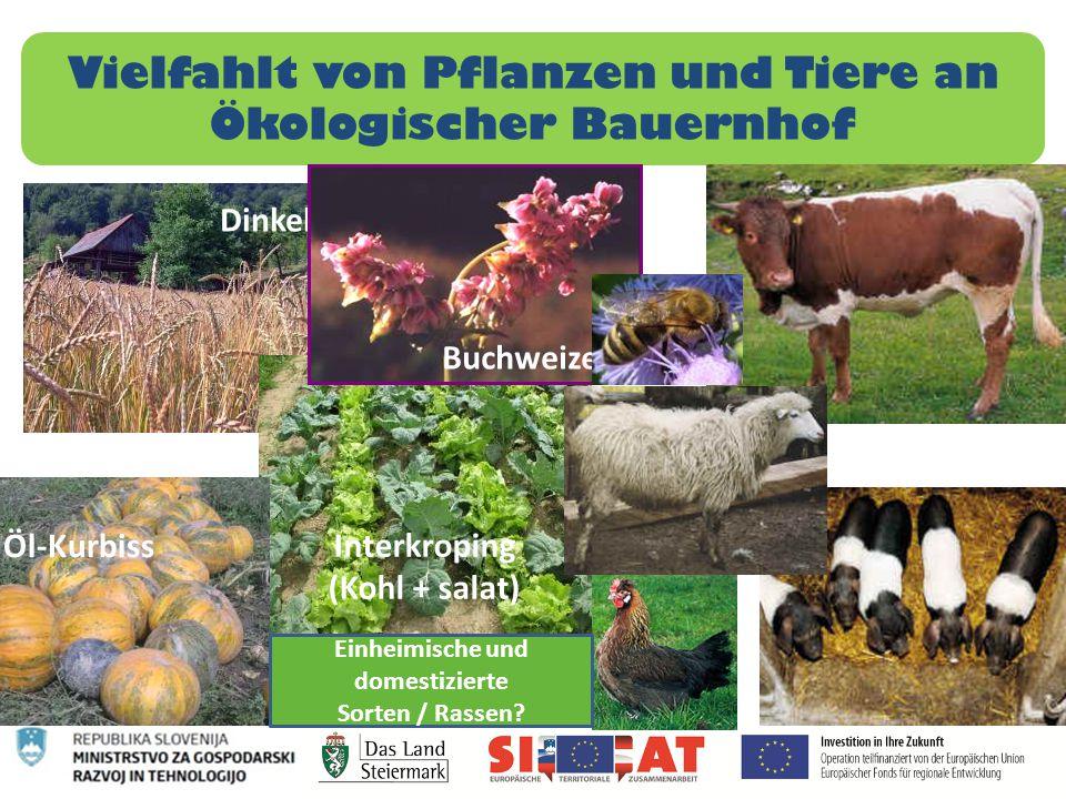 Vielfahlt von Pflanzen und Tiere an Ökologischer Bauernhof