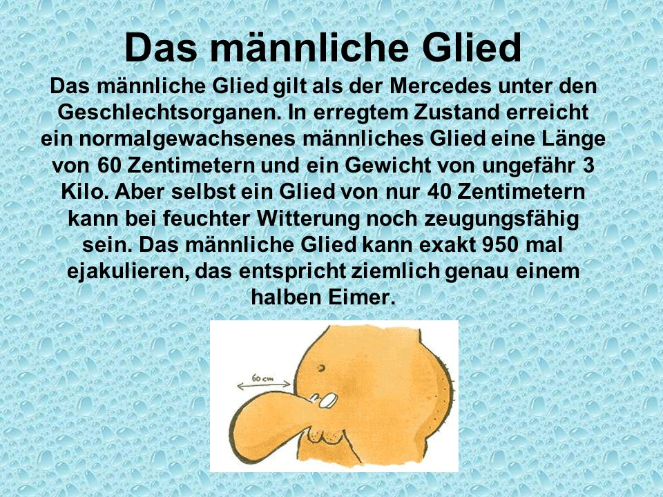 Das männliche Glied Das männliche Glied gilt als der Mercedes unter den Geschlechtsorganen.