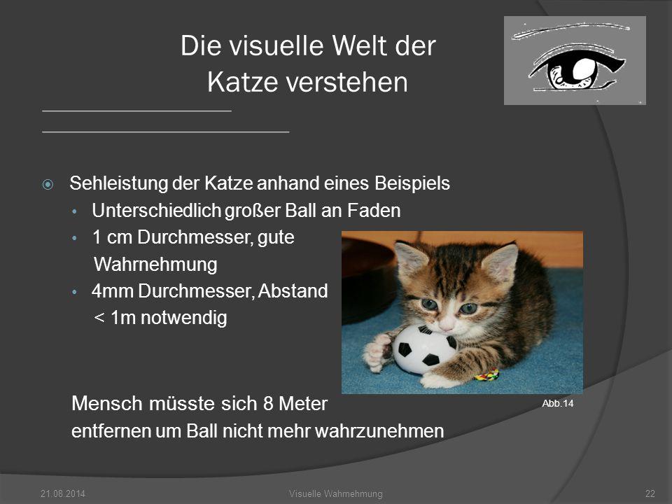 Die visuelle Welt der Katze verstehen