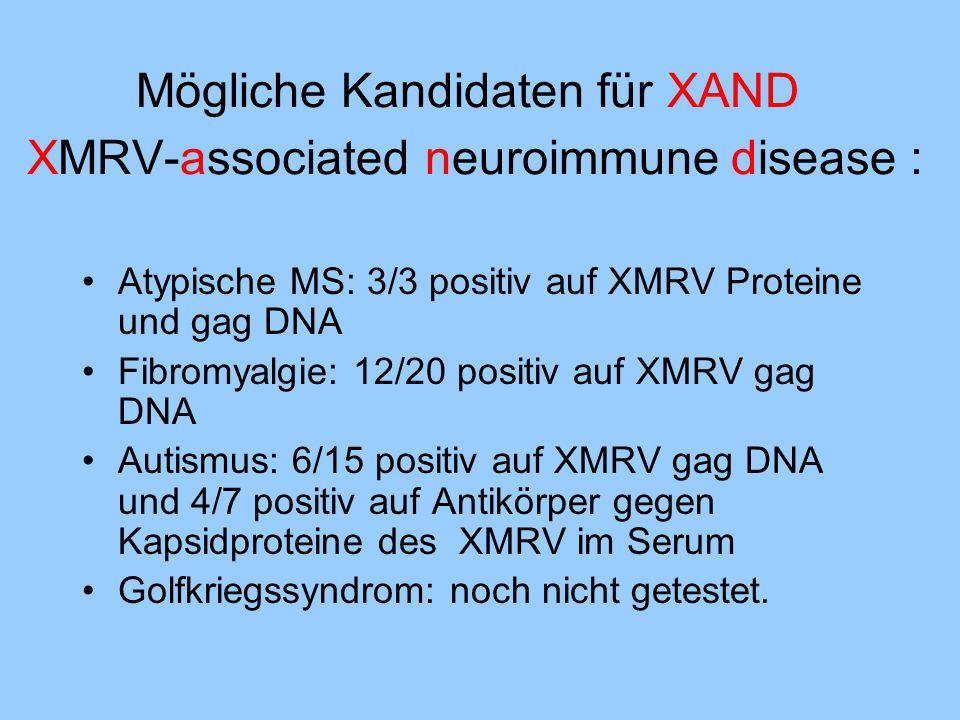 Mögliche Kandidaten für XAND XMRV-associated neuroimmune disease :