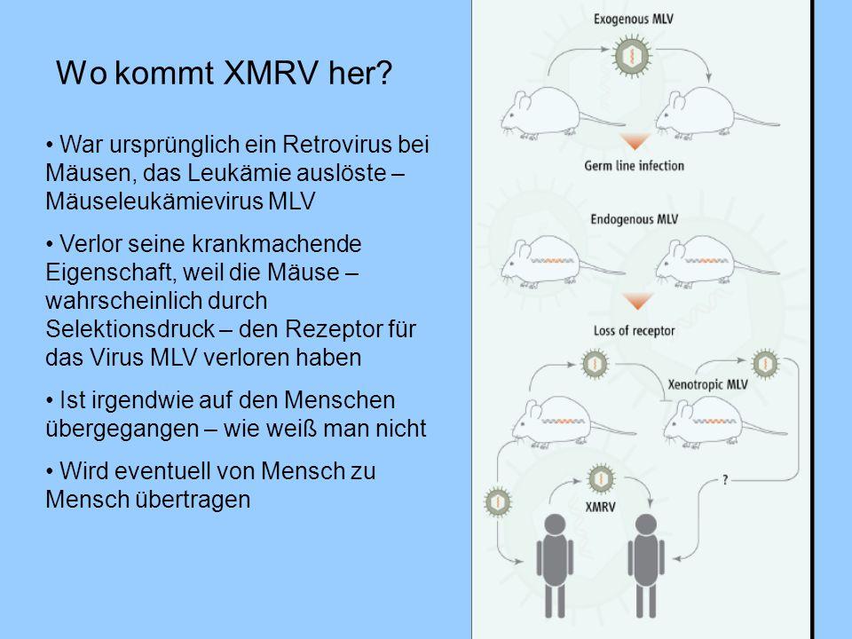 Wo kommt XMRV her War ursprünglich ein Retrovirus bei Mäusen, das Leukämie auslöste – Mäuseleukämievirus MLV.