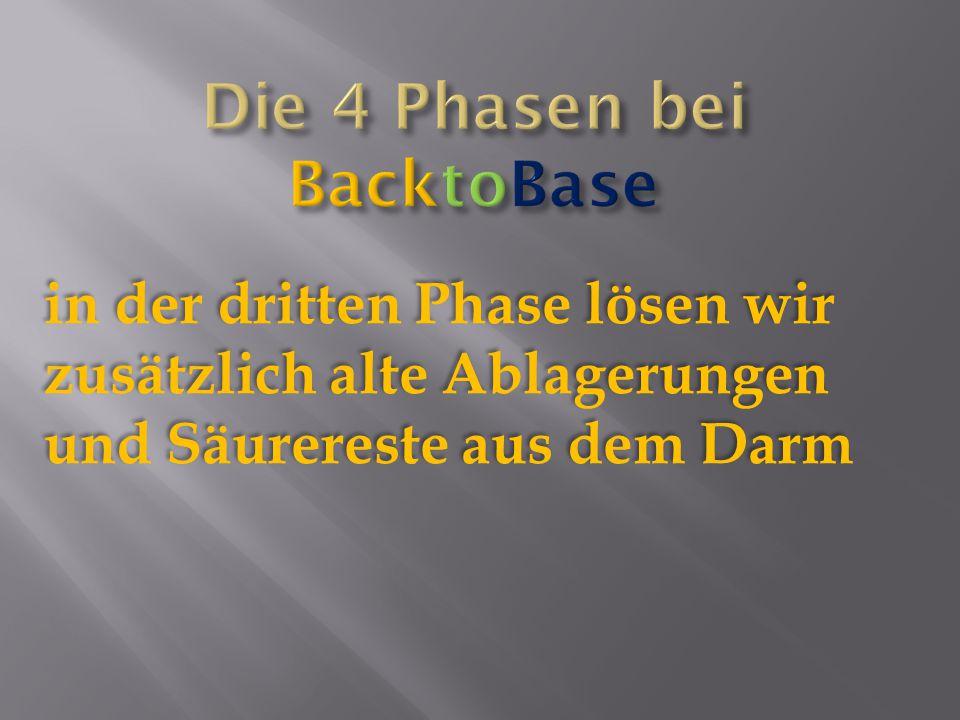 Die 4 Phasen bei BacktoBase
