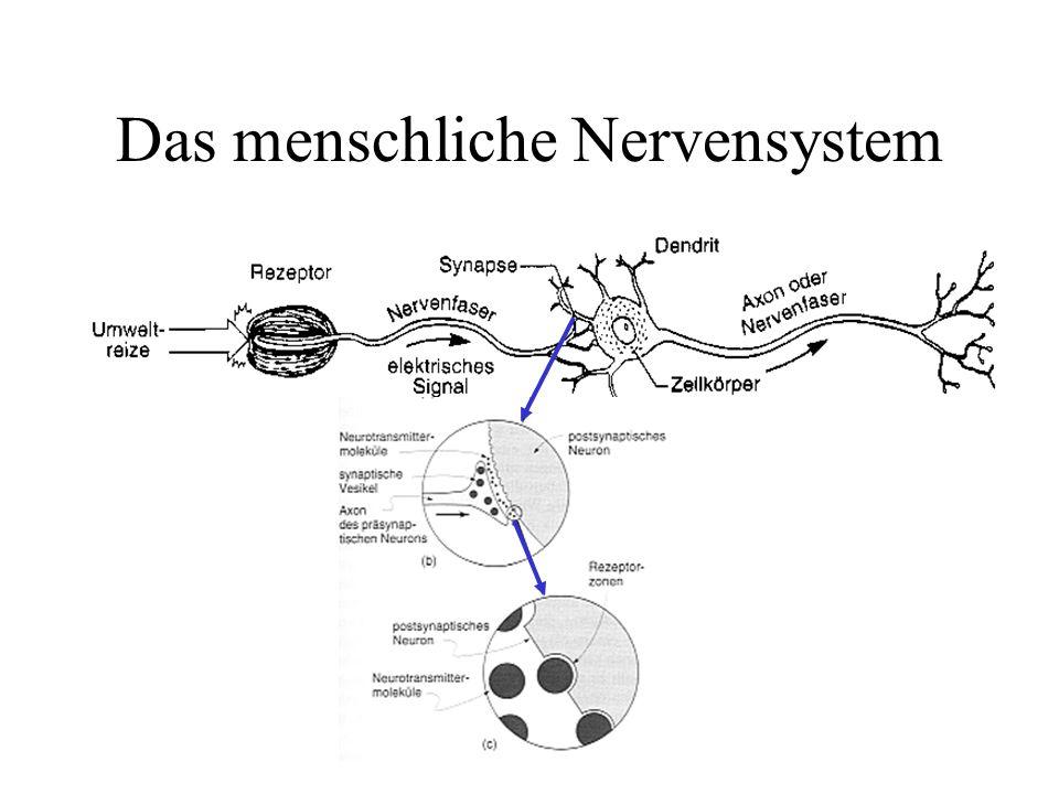 Das menschliche Nervensystem