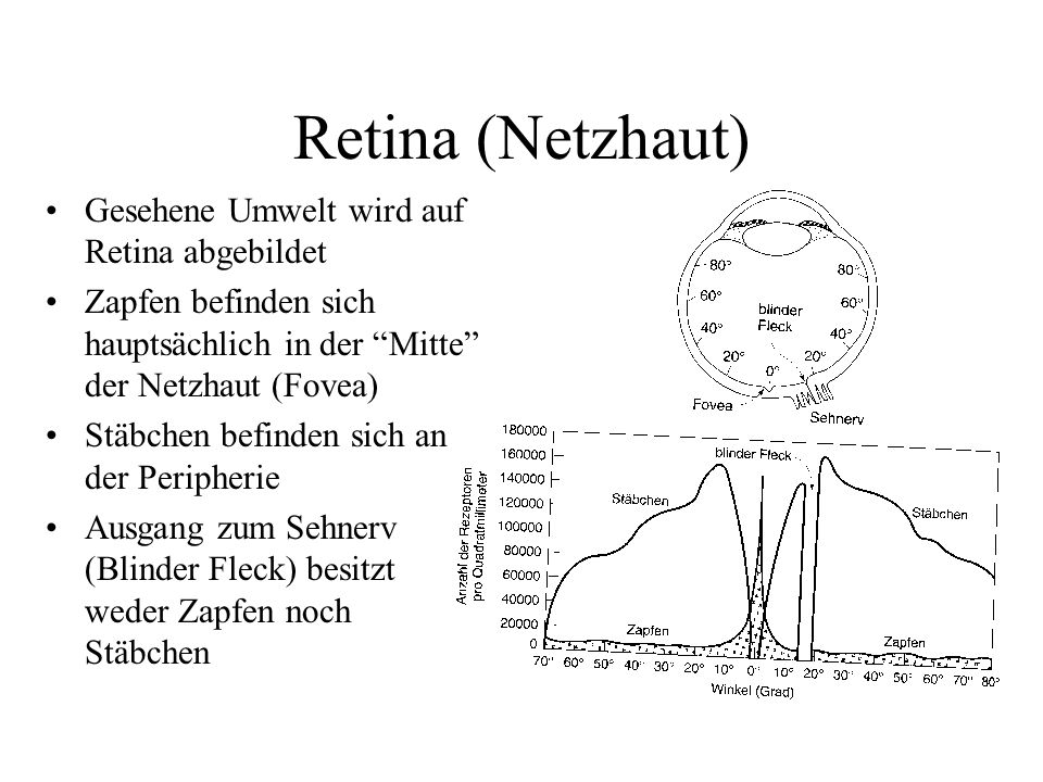 Retina (Netzhaut) Gesehene Umwelt wird auf Retina abgebildet