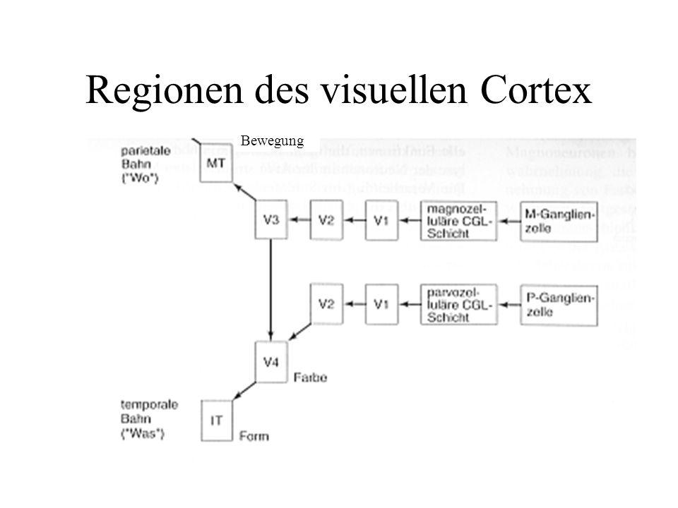 Regionen des visuellen Cortex