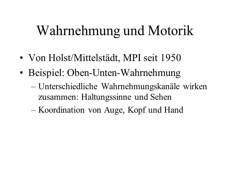 Wahrnehmung und Motorik