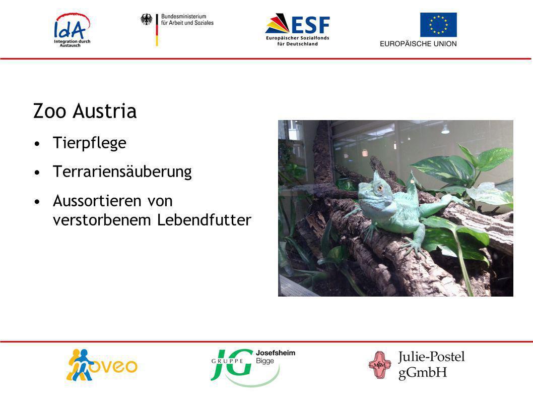 Zoo Austria Tierpflege Terrariensäuberung