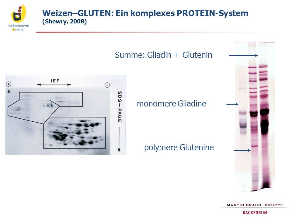 Weizen–GLUTEN: Ein komplexes PROTEIN-System