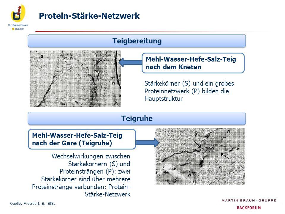 Protein-Stärke-Netzwerk