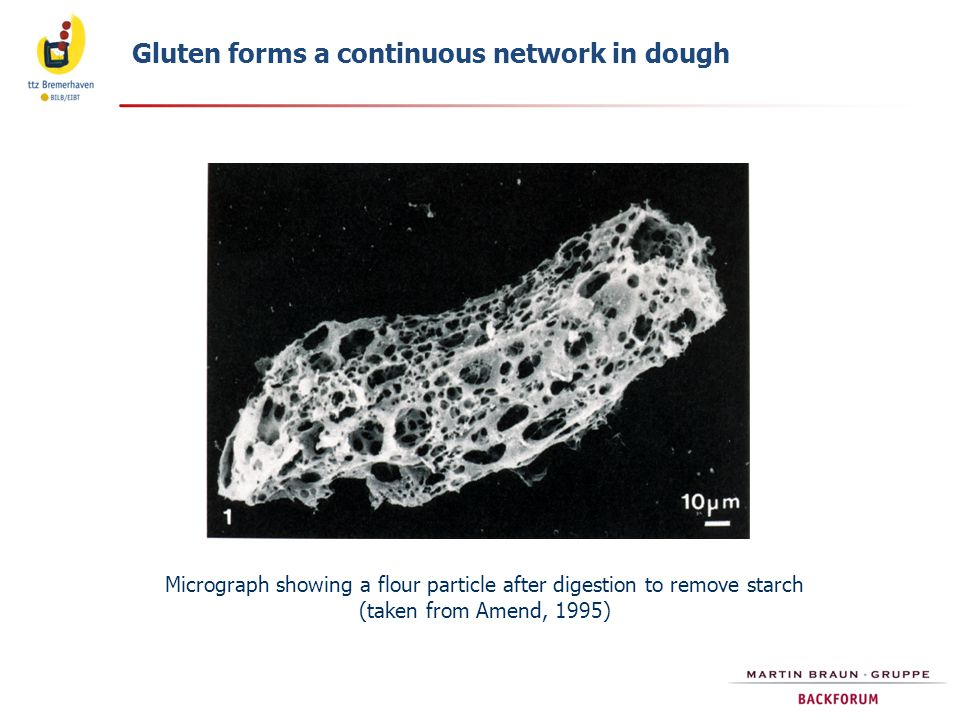 Micrograph showing a flour particle after digestion to remove starch
